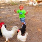 Edmond with chickens