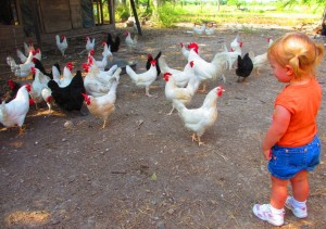 Johanna (orange shirt) and chickens