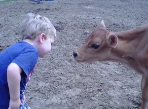 Luke with calf