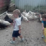 Nolan and Zach with chickens