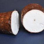 Manioc / cassava cross-section